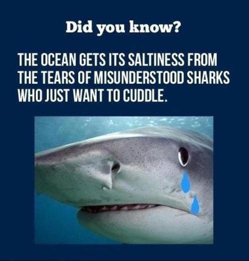funny-shark-tears-cuddle